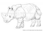 Rhinox2